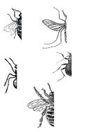 Bees-Flies-Ants.pdf