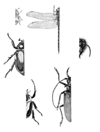 Insects-Worksheet.pdf