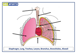 Aqa gcse pe new specification the respiratory system by emmanearyy respiratory systempptx respiratory diagramcx ccuart Images