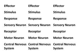 stimulus and response worksheet answers] - 100 images - response ...