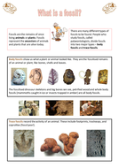 Factsheet---Fossils---Support-for-HA.pptx