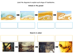 LA-Main---How-fossils-are-formed-storyboard.ppt