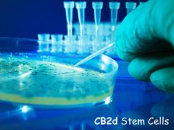 CB2d-Stem-Cells.pptx
