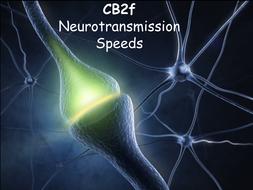 CB2f-Neurotransmission-Speeds.pptx