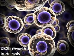 CB2b-Growth-In-Animals.pptx