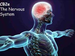 CB2e-The-Nervous-System.pptx