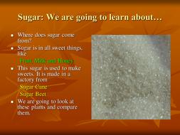 Sugar-Cane---Sugar-Beet-Powerpoint.ppt