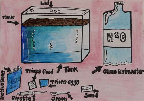 Minibeasts, Habitats and Life Cycles: Triops Hatching Project