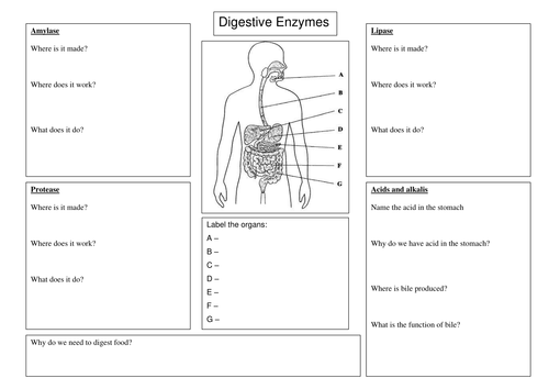 Human Digestive Enzymes Food Tests New Gcse By