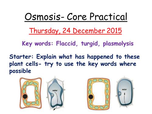 osmosis in potato course work