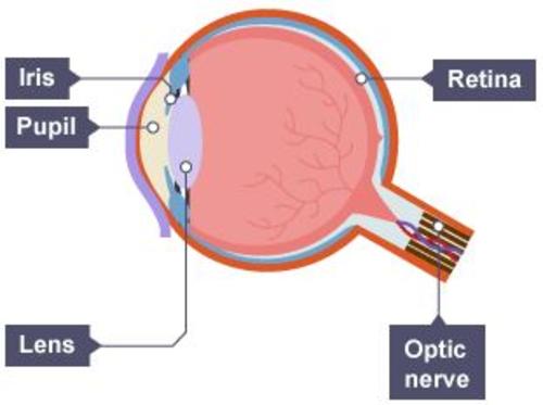 biology jpegs yr7 - yr11 (b1, b2, b3) by rokerroar ... label the eye diagram answers the eye diagram ks3 #3
