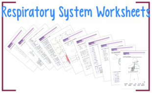 Respiratory system worksheets by biogeoscience teaching resources respiratory system worksheets ccuart Image collections