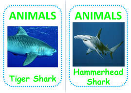 10-shark-flashcards.pdf