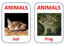 100-australian-animals-flashcards.pdf