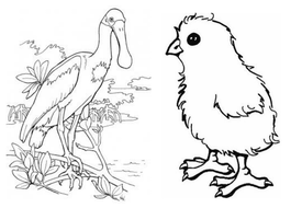 animal-colouring-pages.pptx
