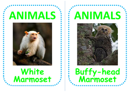 16-monkey-flashcards.pdf