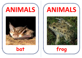 australian-animals-flashcards.pdf