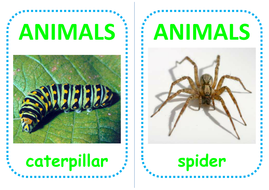 european-animal-flashcards.pdf