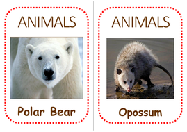 north-america-animal-flashcards.pdf