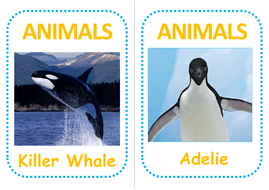 antarctica-animal-flashcards.pdf