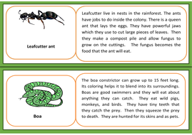 animal-information-cards-and-blank-card-for-pupils-to-complete.pdf