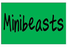 20-most-common-minibeasts-name-cards.pdf