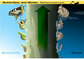 butterlfy-and-moth-poster.pdf