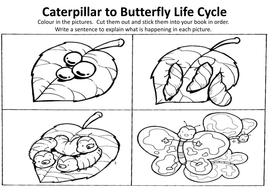 MINIBEASTS INSECTS SCIENCE RESOURCES EARLY YEARS KS1-2