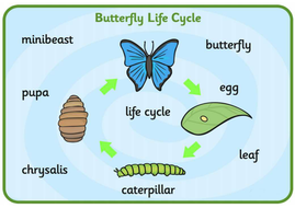 butterfly-life-cycle-spelling-mat.pdf