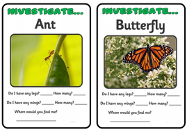insect-investigation-cards.pdf