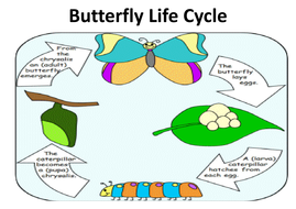butterfly-life-cycle-poster.pdf