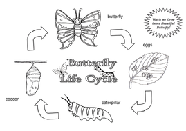 colour-your-own-butterfly-life-cycle.pdf