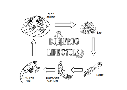 FROG LIFECYCLE SCIENCE TEACHING RESOURCES DISPLAY CD EARLY
