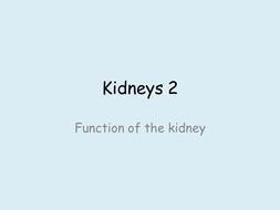 Kidneys-2.pptx