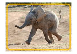 elephant-photo-posters.pdf