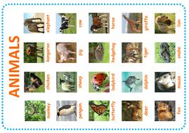 animal-poster.pdf