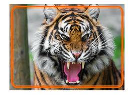 tiger-photo-posters.pdf