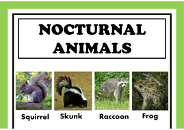 NOCTURNAL-ANIMALS-A3-POSTER.pdf