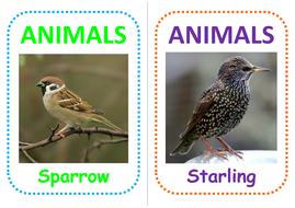 42-bird-flashcards.pdf
