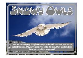 snowy-owl-posters.pdf