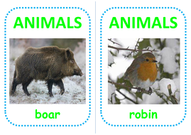 26-woodland-animal-flashcards.pdf