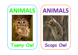 12-owl-flashcards.pdf