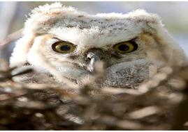 12-A4-photos-of-owls.pdf