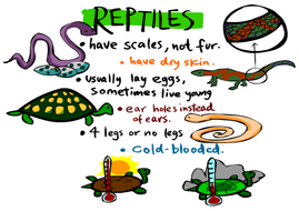 5-animal-types-posters.pdf