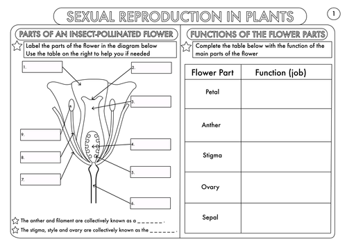 Plant Reproduction Worksheet Pack by beckystoke Teaching – Structure of a Flower Worksheet