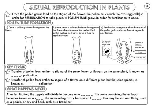 Plant Reproduction Worksheet apexwindowsdoors – Plant Reproduction Worksheet