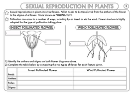 GCSE Biology: Plant Reproduction Worksheet Pack by beckystoke ...