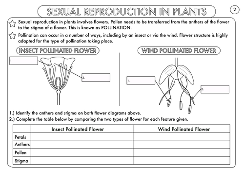 Plant Reproduction Worksheet Pack by beckystoke Teaching – Pollination Worksheet