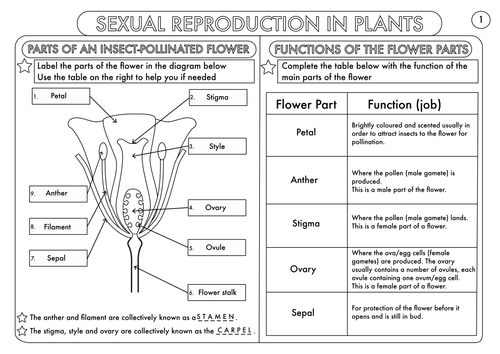 Plant Reproduction Worksheet Pack by beckystoke Teaching – Plant Reproduction Worksheet