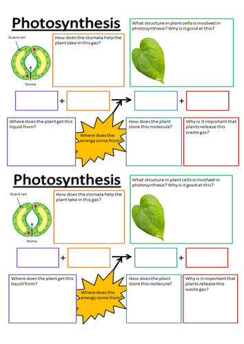 Worksheets Photosynthesis Worksheet Middle School photosynthesis activity worksheet delibertad sharebrowse